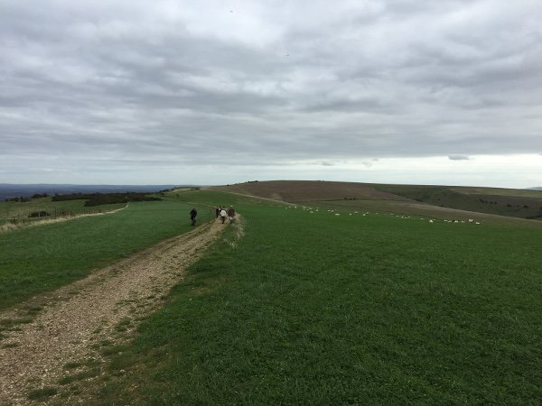 Lovely Ridge Top Walk along the South Downs Way