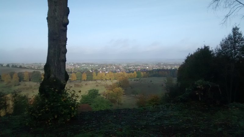 View from Tring Woods