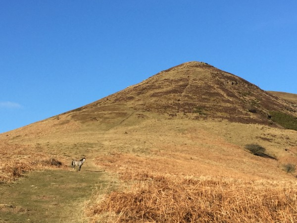Wild pony on approach to summit