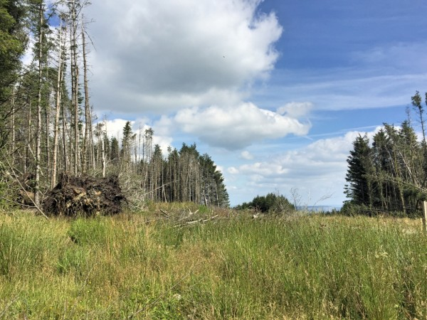 Trees cleared for Wind Farm