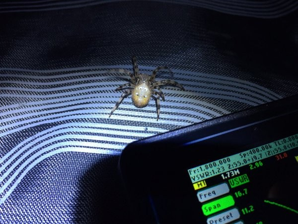 Spider came to see the antenna analyser in action while testing a 160m dipole at night